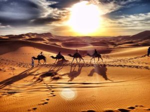 paseo en camellos desierto