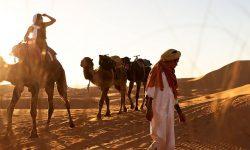 camello-desierto