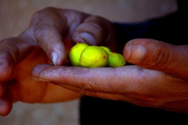 Cooperativas mujeres marruecos