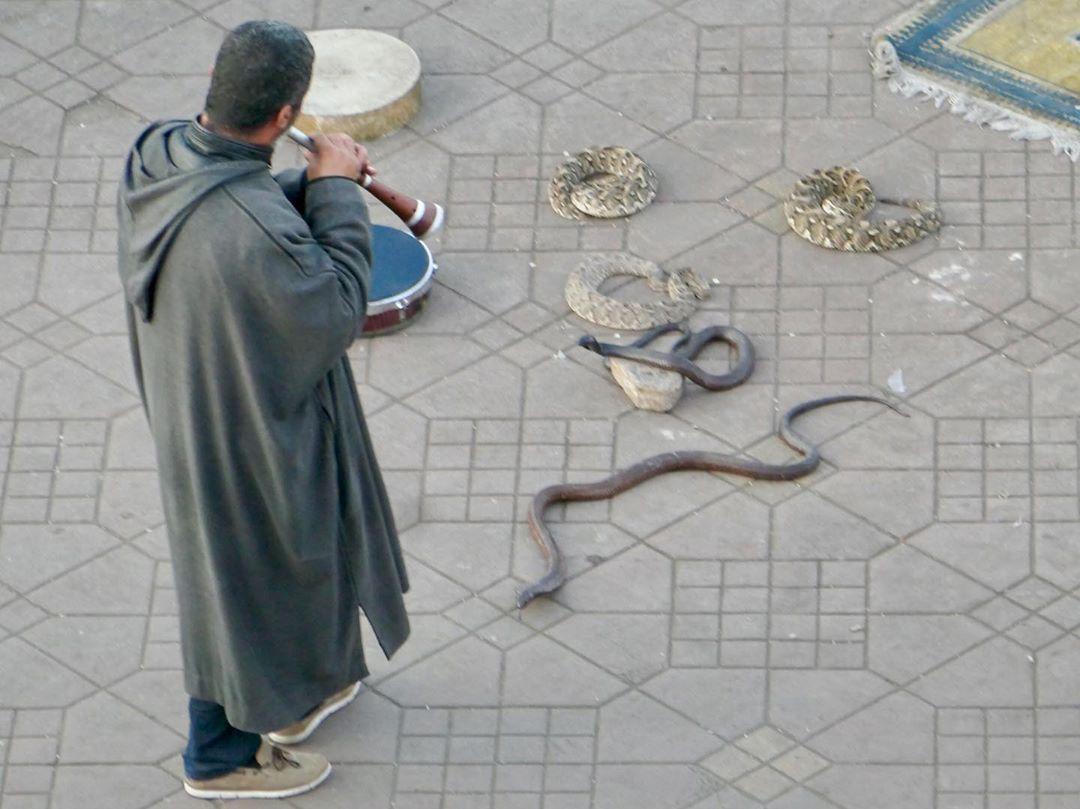 jema el fna encantador serpientes